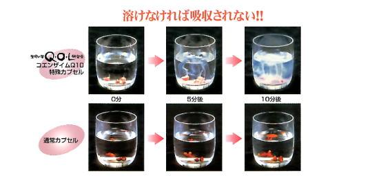 コエンザイムQ10吸収の違い