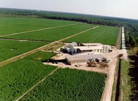 シュワーベの自社農場
